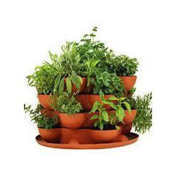 Indoor Plants Service