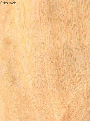 Golden Maple Veneers