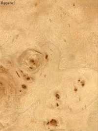 Mappa-Burl Veneers