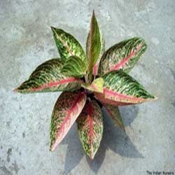 Indoor and Outdoor Plants
