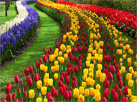 Kashmir Tulip Garden Tour Packages