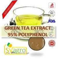 GREEN TEA  EXTRACT 95% POLYPHENOL