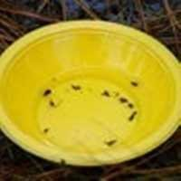 Yellow Sticky Pan