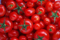 Fresh Beef Tomato, Fresh Plum Tomatoes For Sale