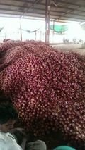 Red Onion Exporters