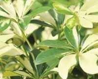 Floriculture Supplies