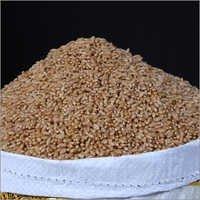 India Raw Wheat