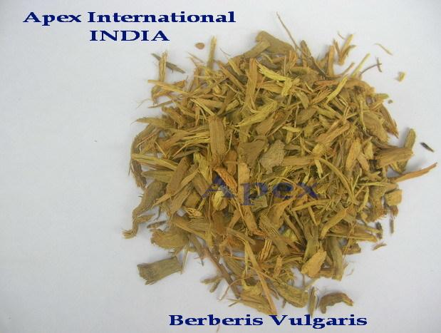 Berberis Aristata