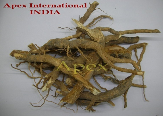 Vinca Rosea Leaf, Roots