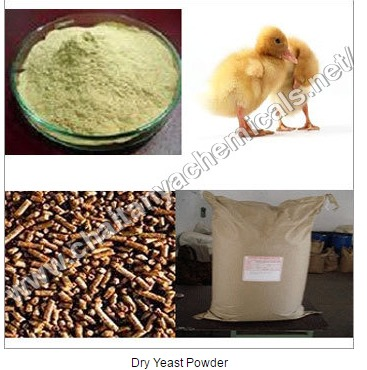 Dry Yeast Powder