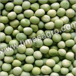 Large Vatana Green