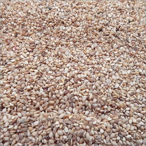 Hybrid Sesame Seeds