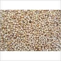 Premium Indian Sesame Seeds