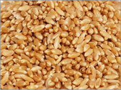 Natural soft Wheat
