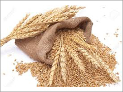 Natural Milling Wheat