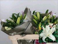 Lilium Caroline double Flowers
