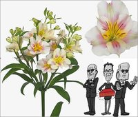 New An Executive Flowers