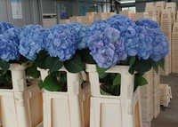 Hilverda Flowers