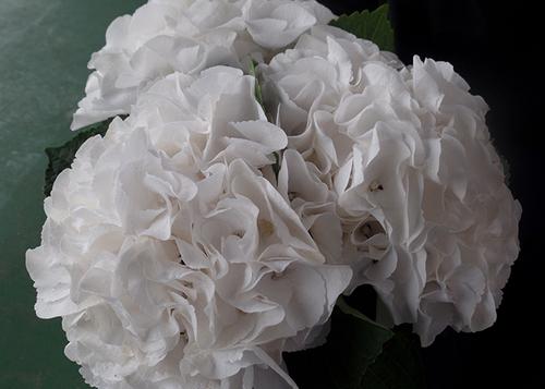 Liesbeth Flowers