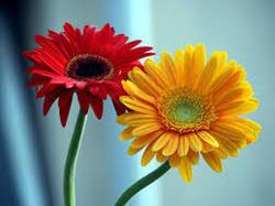 Medicinal  & Aromatic Plants