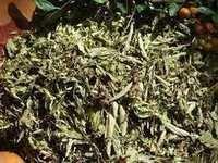 Stevia Rebaudiana Dry Leaves