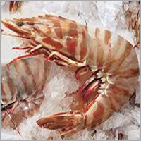Sea Caught Tiger Prawns