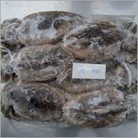 Frozen Whole Round Cuttlefish
