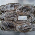 Frozen Whole Round Cuttlefish