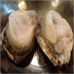 Whole Frozen Abalone