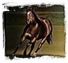 Provet Horse Feed
