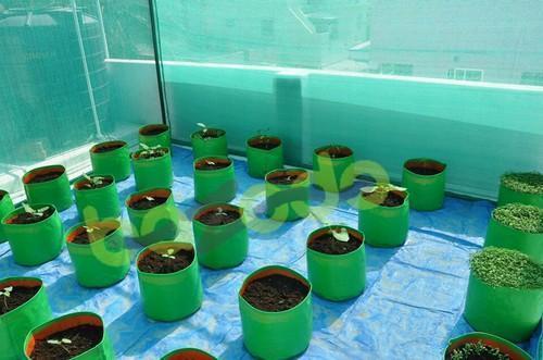 Balcony Plant Bag
