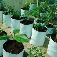 Kitchen Gardening Plant Bag