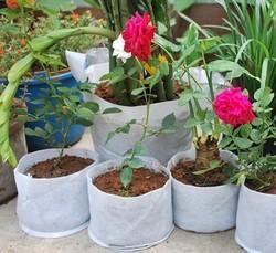 Rooftop Gardening Bag
