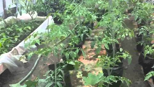 Terrace Organic Gardening