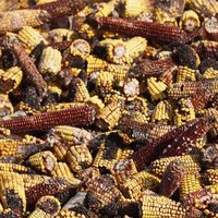 Aflatoxin Material Testing Services