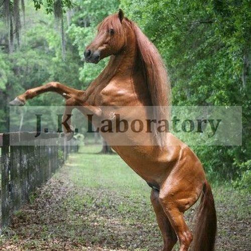 Animal Feed Testing Laboratory