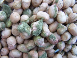 Aflatoxin Testing Services