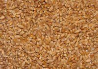 Animal Feed Wheat