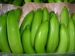 Cavendish Green Bananas
