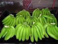 Fresh Cavendish Green Bananas