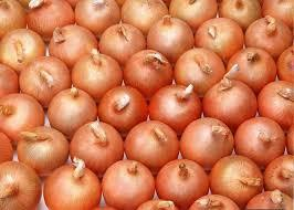 Red Onions For Sale