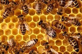Honey Bee Keeping