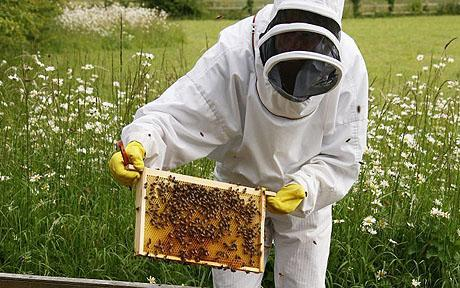 Natural Honey Bee Keepers