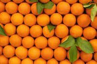 FRESH SWEET ORANGES