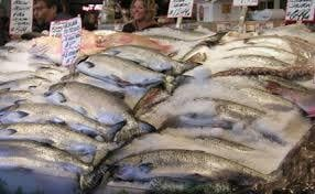 FROZEN AND DRY SALMON FISH