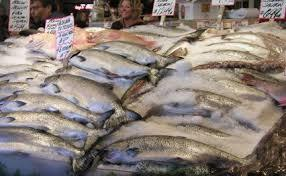 FROZEN AND DRY SALMON FISH FOR SALE