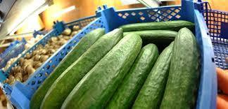 CUCUMBER AND DRUMS CUCUMBER