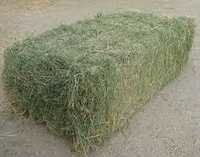 Best Offer High Quality Alfalfa Hay