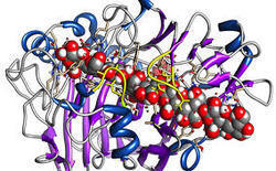 Pharmaceutical Enzymes