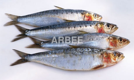 Sardine Fish Oil (Fatty Acid)